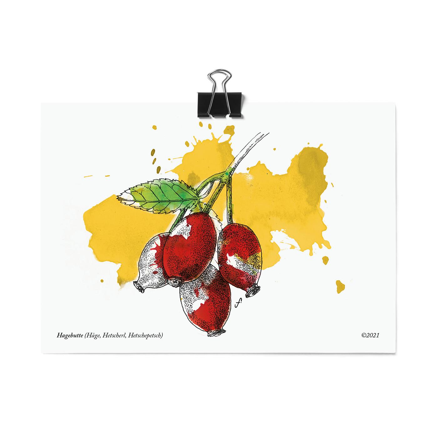 Postkarte,  Hagebutte